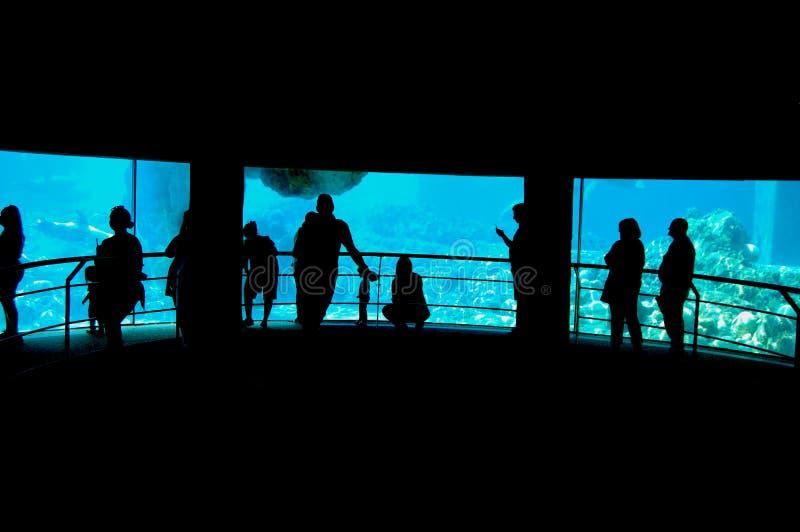 Weiche blaue Farben lizenzfreie stockfotografie
