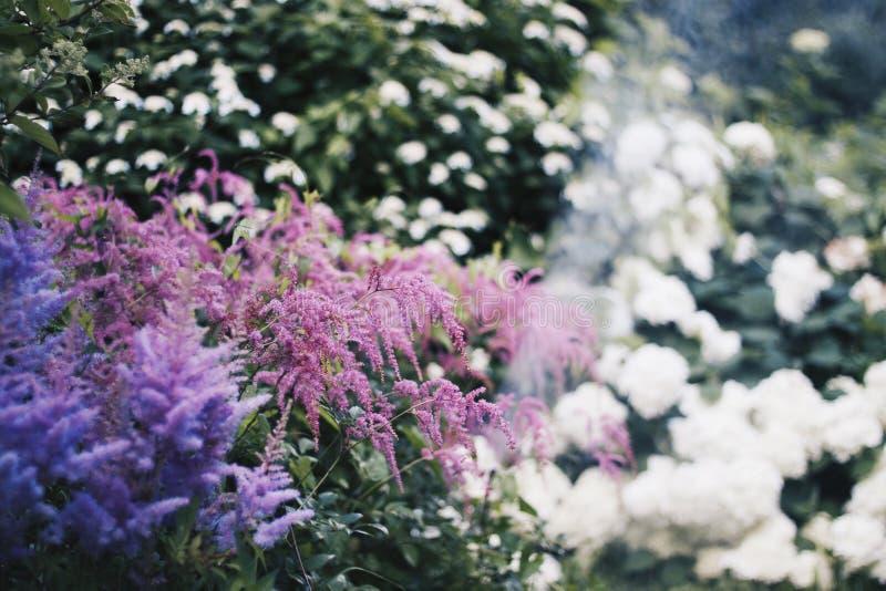 Weiche Blumen stockbild