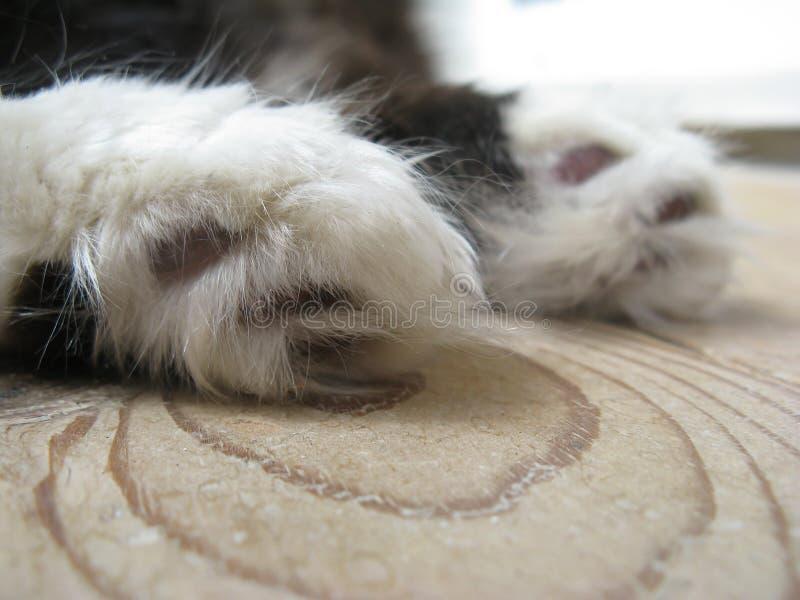 Weiche braune lederne Auflagen der Tatzen der Wollflaumigen Katze lizenzfreies stockfoto