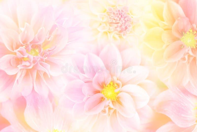 Weiche Dahlienblume im Pfirsichton-Frühlingshintergrund lizenzfreies stockbild
