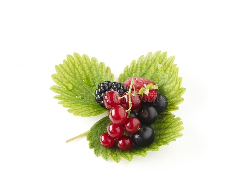 Weiche Früchte stockfotografie