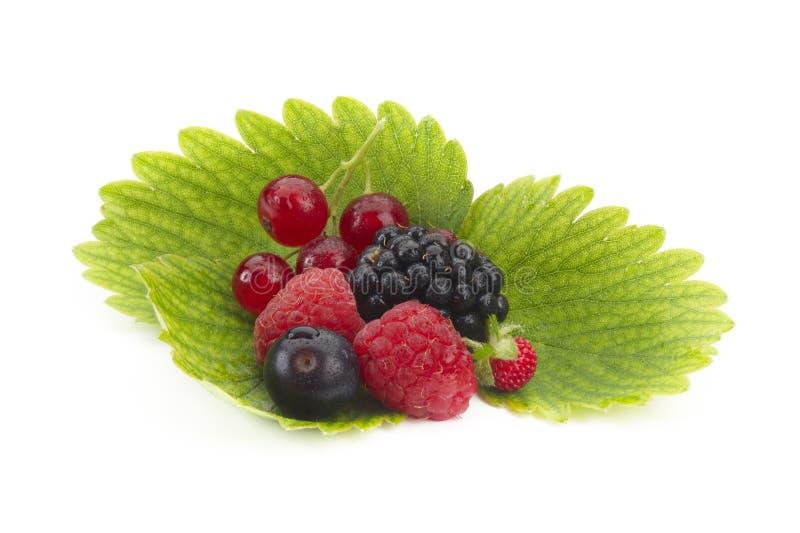 Weiche Früchte stockbilder