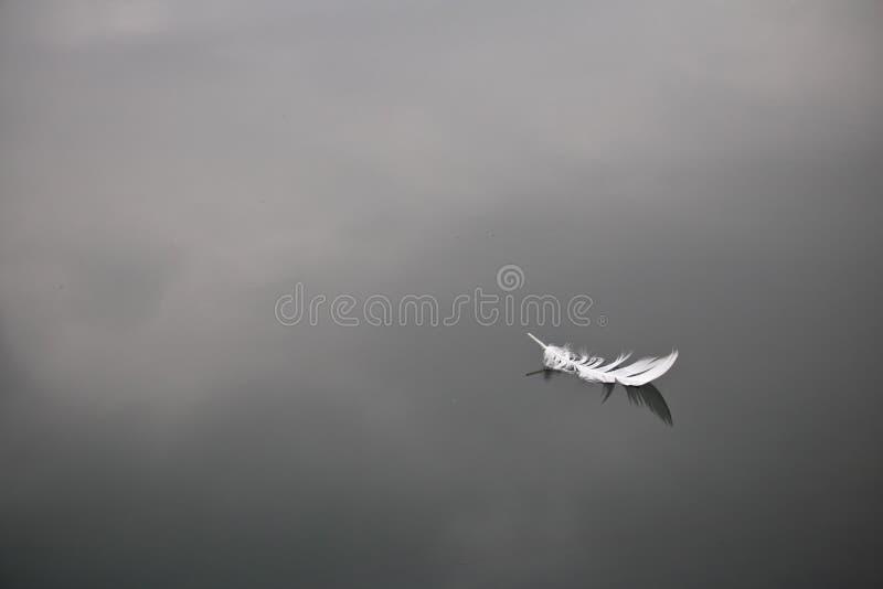 Weiche weiße Vogelfeder lokalisierte das Schwimmen auf ruhigen Wasserseehintergrund stockbild