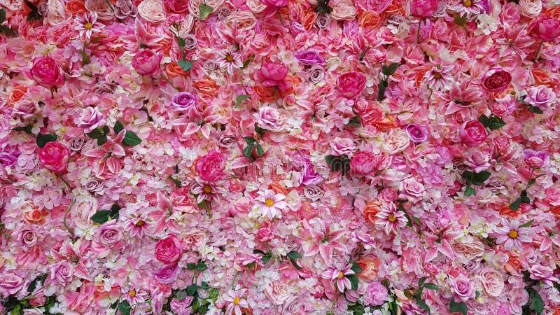 Weicher Farberosen-Hintergrund Das Blumenblatt der Rosen Bunter Rosenwandhintergrund mit verschiedenen Arten von Rosen Rosafarben lizenzfreie stockbilder