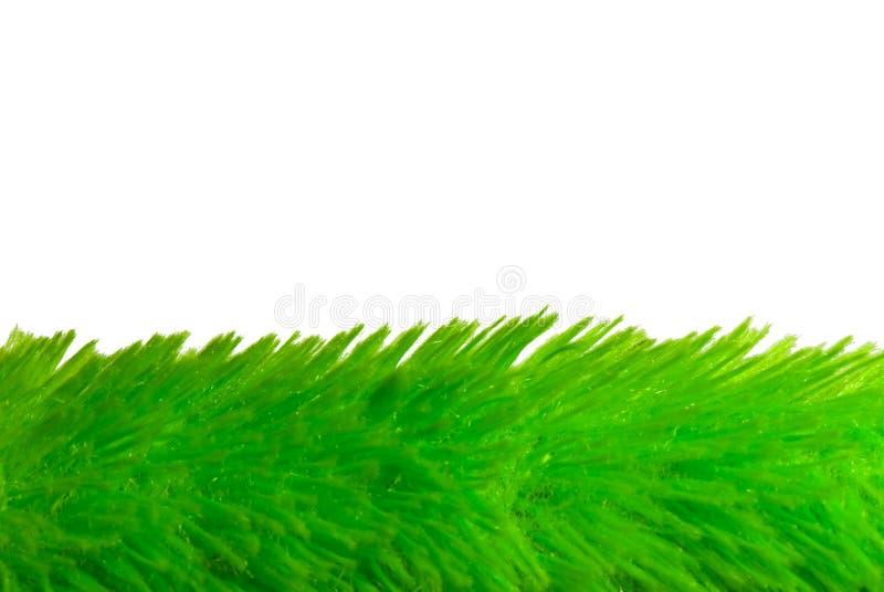 Weiches Gras stockfotos
