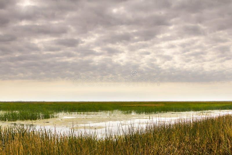 Weiches Morgen-Licht bei Cheyenne Bottoms Wildlife Refuge lizenzfreies stockbild