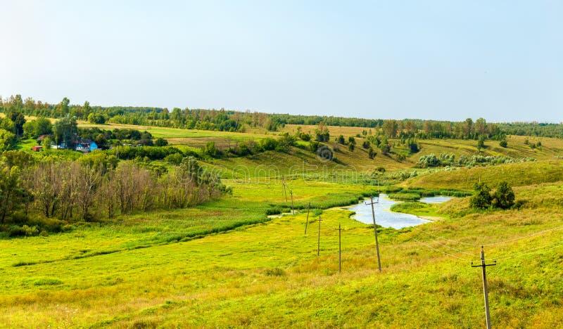 Weide in Bolshoe Gorodkovo - Kursk-gebied, Rusland royalty-vrije stock foto's