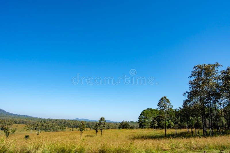 Weide en bomen in Thung Salaeng Luang, Phetchabun stock foto