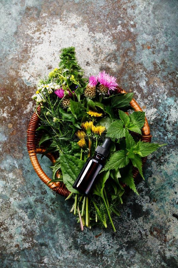 Weide en Geneeskrachtige kruiden en kruidentint stock afbeeldingen