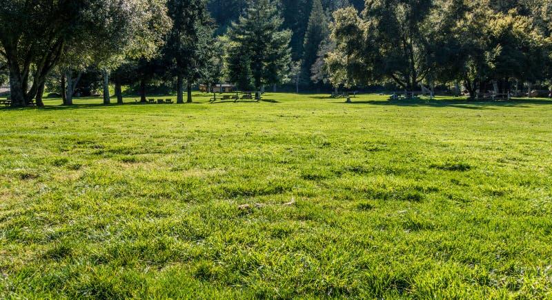 weide in het park stock foto's