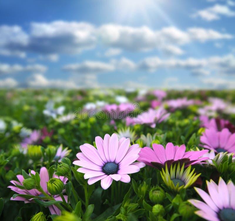 Weide met bloemen royalty-vrije stock afbeeldingen