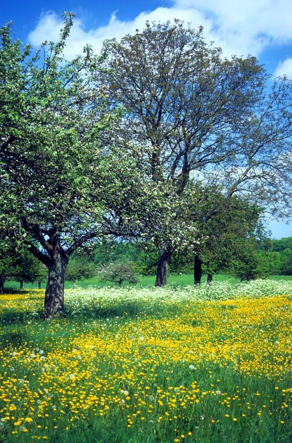 Weide met bloemen 4 royalty-vrije stock afbeelding