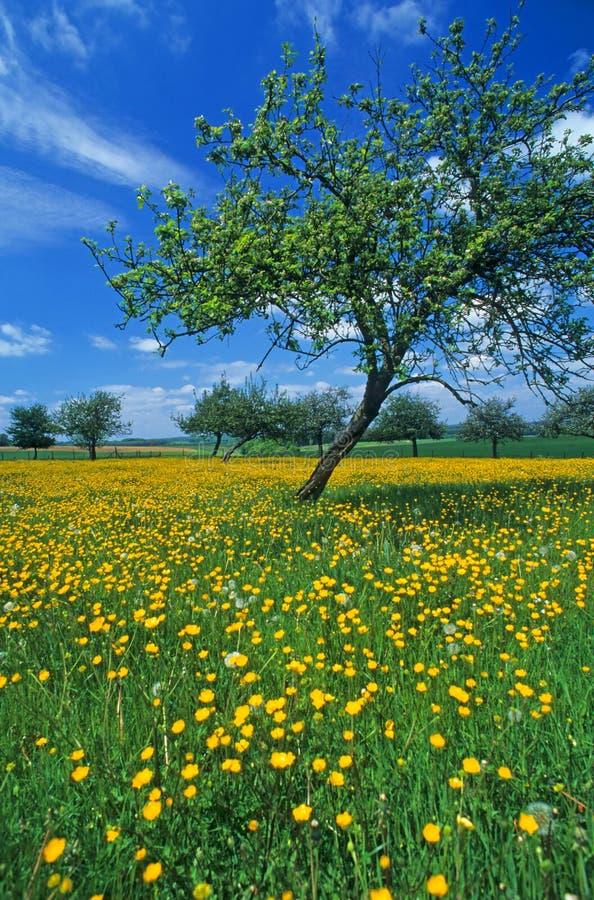 Weide met bloemen 8 stock afbeelding