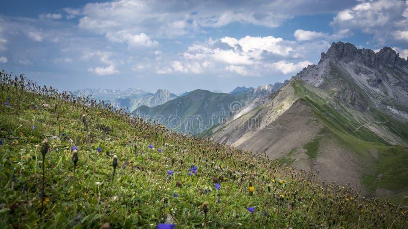 Weide met bloemen in Allgau-Alpen royalty-vrije stock afbeelding