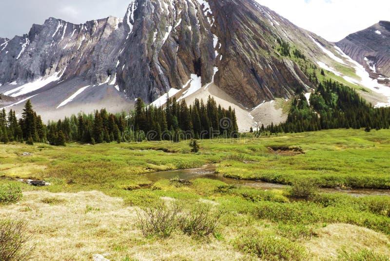 Weide met een kreek en berg op de achtergrond stock foto