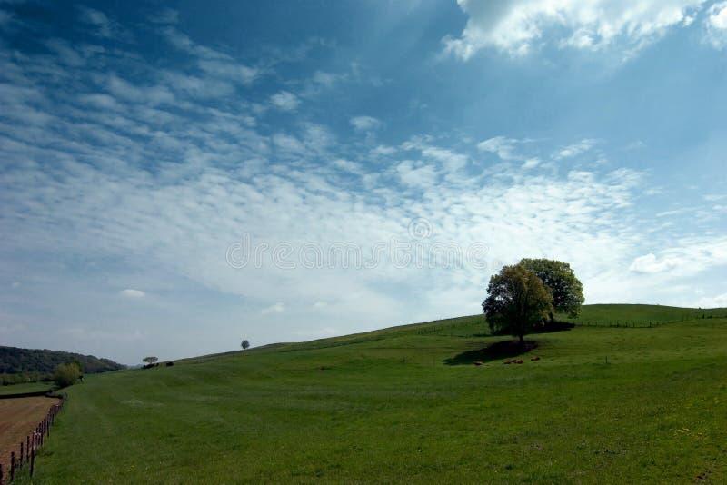 Weide met eenzame bomen royalty-vrije stock fotografie