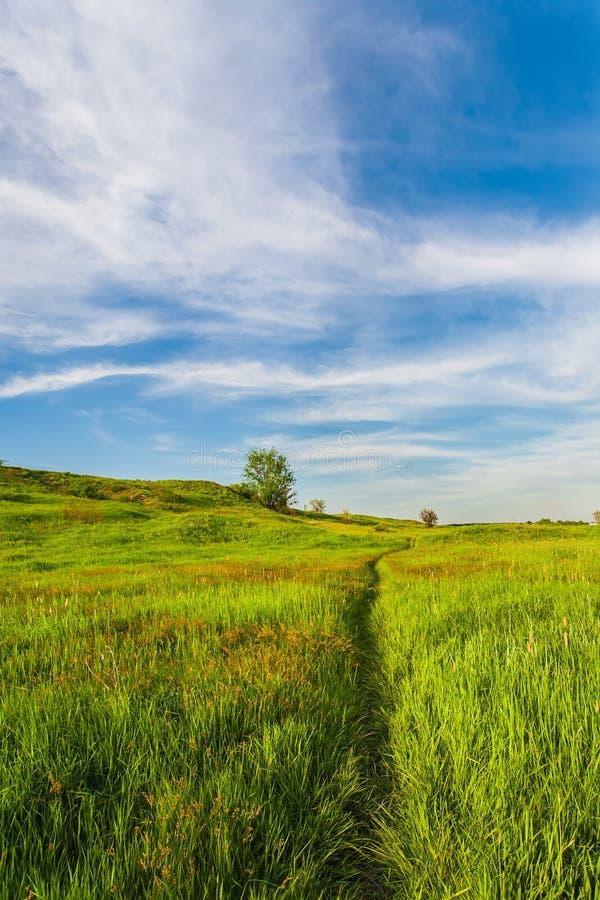 Download Weide Met Groen Gras En Blauwe Hemel Stock Afbeelding - Afbeelding bestaande uit horizon, dramatisch: 29509683