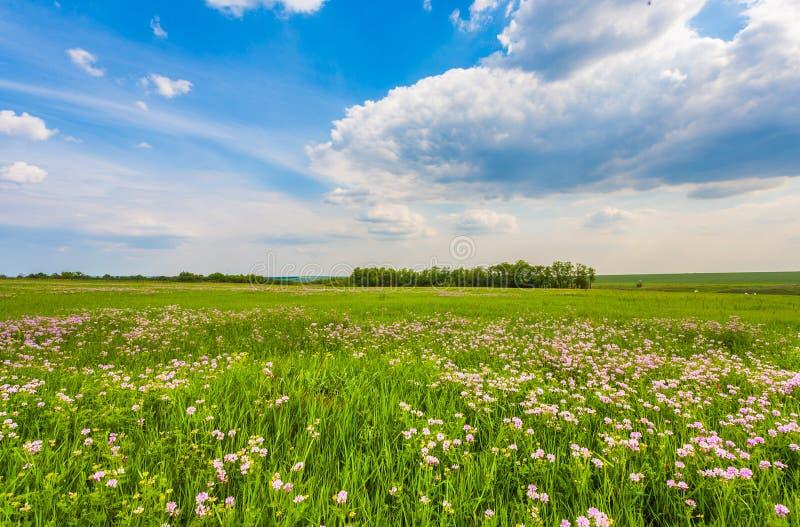 Download Weide Met Groen Gras En Blauwe Hemel Stock Foto - Afbeelding bestaande uit aarde, heuvel: 29510304