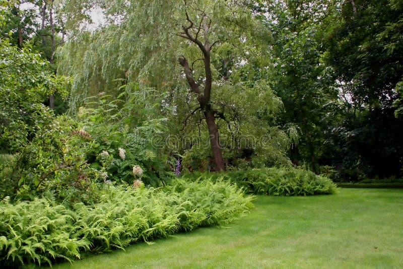 Weide-Park stockbild