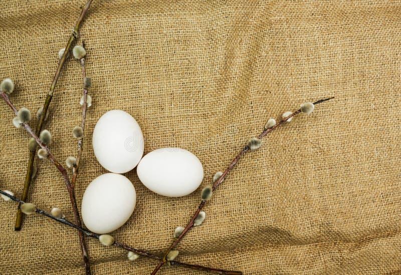 Weide und Eier, Ostern-Hintergrund lizenzfreie stockfotografie