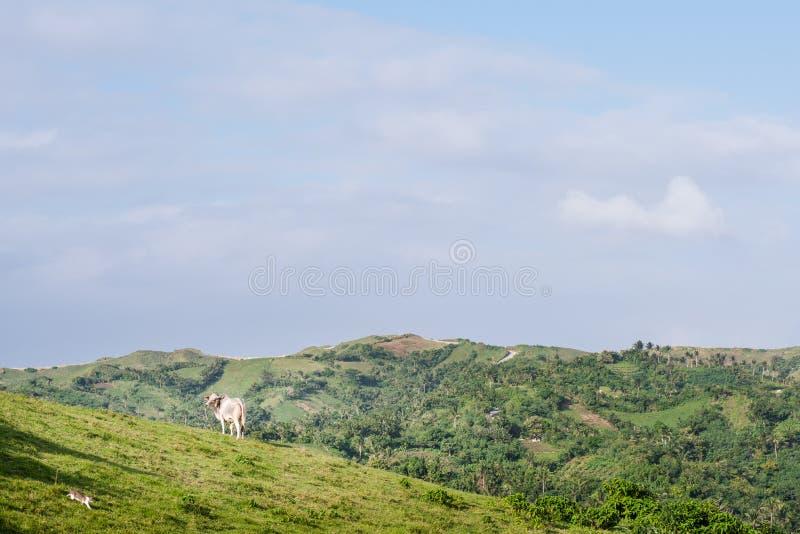 Download Weide Van Batanes, Filippijnen Stock Afbeelding - Afbeelding bestaande uit heuvel, summer: 107708421