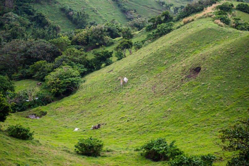 Download Weide Van Batanes, Filippijnen Stock Afbeelding - Afbeelding bestaande uit gras, lush: 107708613