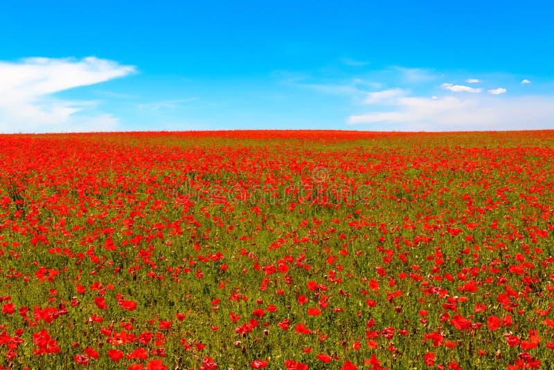 Weide van rode papavers tegen blauwe hemel royalty-vrije stock afbeelding