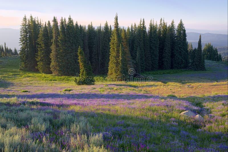 Weide van wildflowers in de Raad Bergen stock foto's