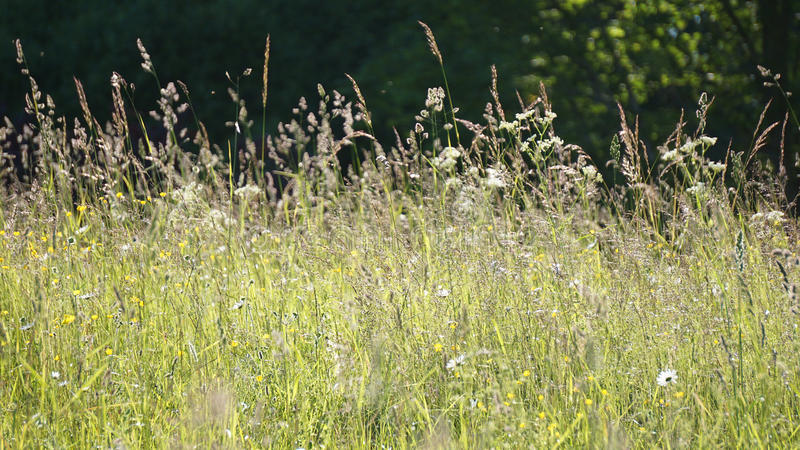 Weidebloemen in de zomer stock afbeeldingen