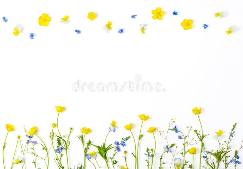 Weidebloemen met gebiedsboterbloemen en pansies geïsoleerd op witte achtergrond Hoogste mening met exemplaarruimte stock fotografie