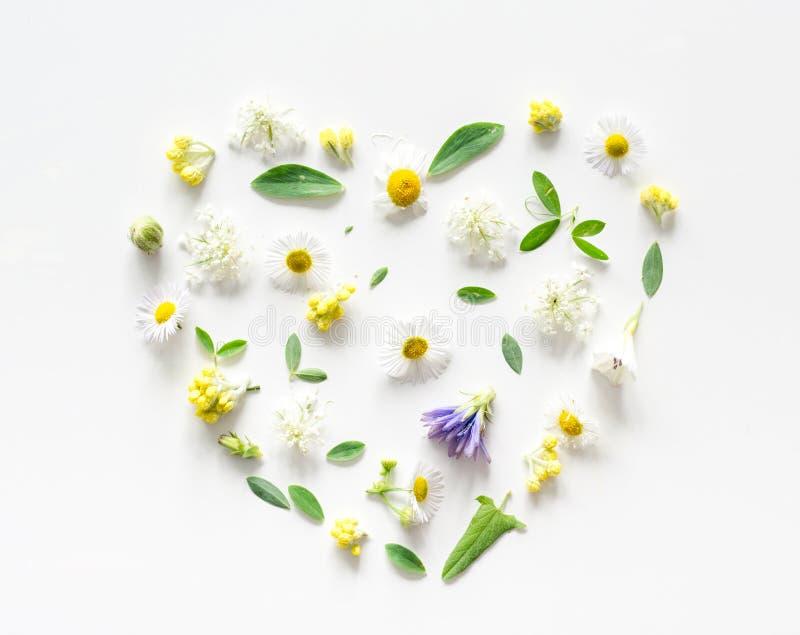 Weidebloemen op witte achtergrond in de vorm van een hart stock afbeelding