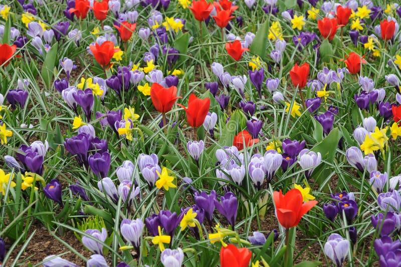 Weidehoogtepunt van de lentebloemen stock foto's