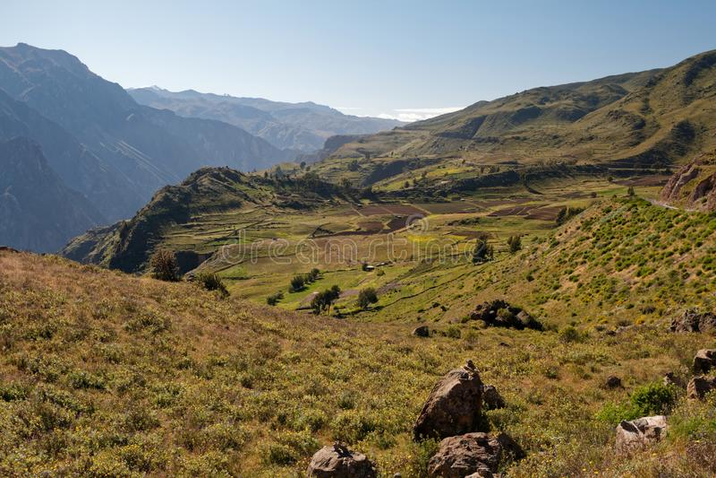 Weiden in Colca-Canion, Peru stock afbeelding