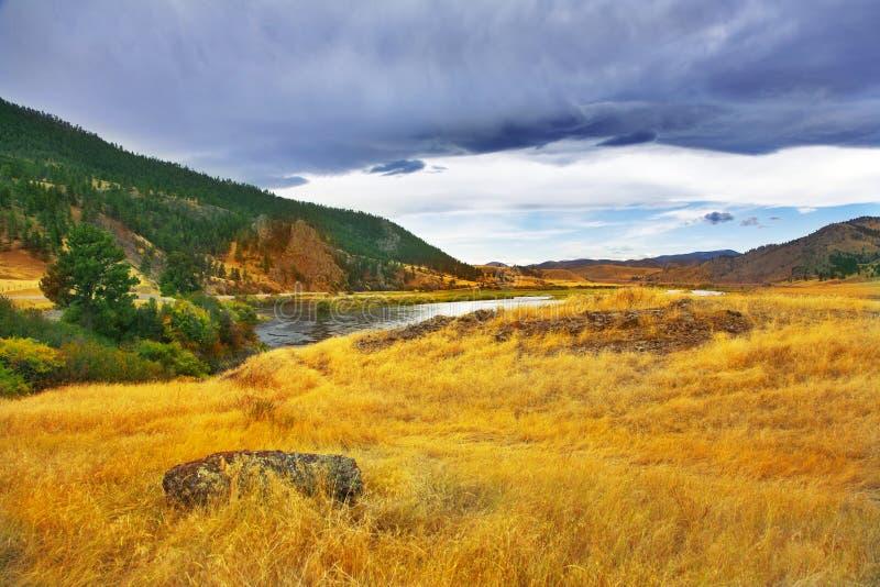 Weiden en de rivier. stock afbeeldingen