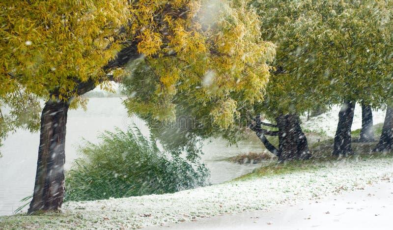 Weiden im Herbst stockfotografie