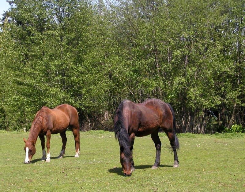 Download Weiden lassen stockbild. Bild von braun, field, heck, weide - 6935