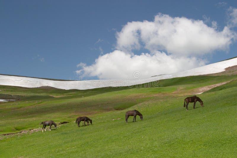 Weiden lassende Pferde lizenzfreie stockfotografie