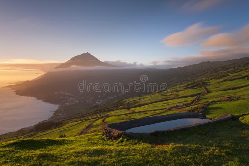 Weiden von den Azoren lizenzfreies stockbild