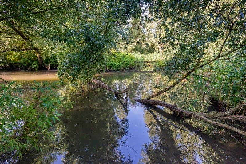 Weidenbaum gefallen in The Creek lizenzfreies stockbild