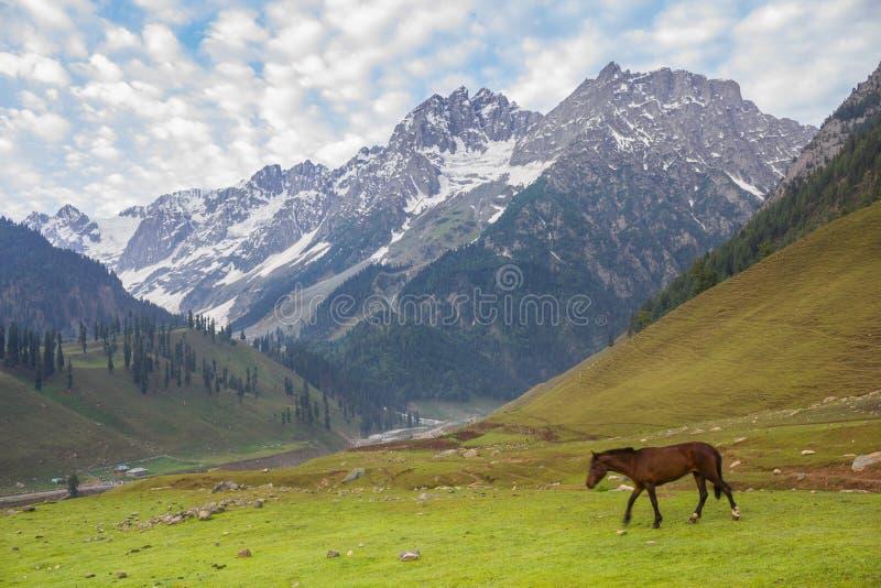 Weidende paarden in de bergen stock fotografie