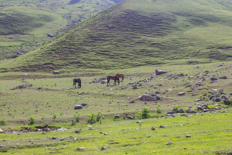 Weidende paarden in de bergen royalty-vrije stock afbeelding