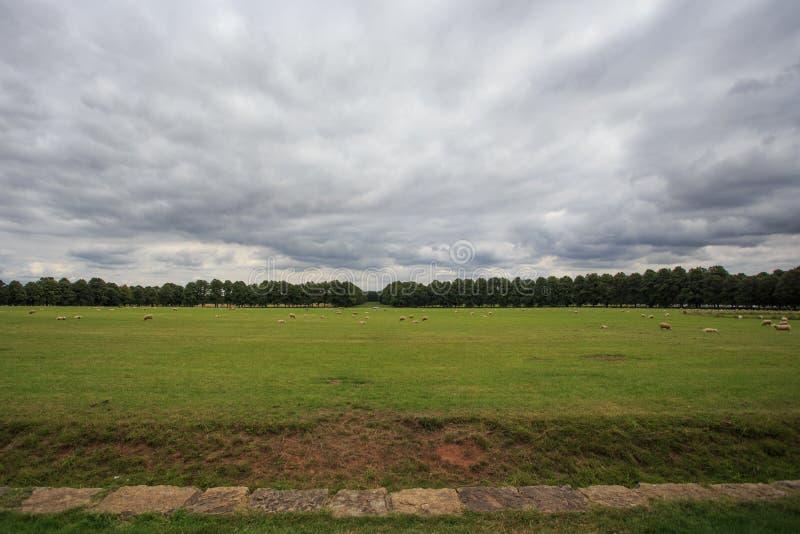 Weidende schapen op een Engels landbouwbedrijf royalty-vrije stock foto