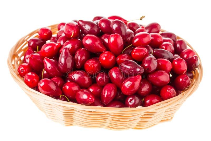 Weidenkorb mit Beeren des roten Hartriegels lizenzfreie stockfotos