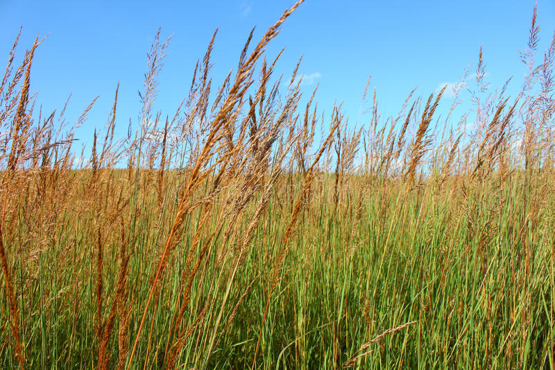 Weidenlandschap Illinois stock afbeelding