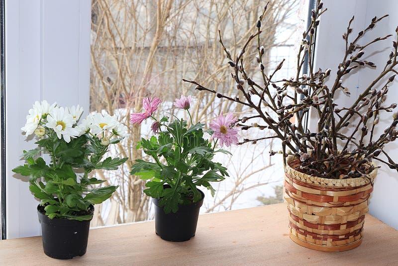 Weidenniederlassungen und frühe Blumen auf dem Fenster lizenzfreie stockfotos