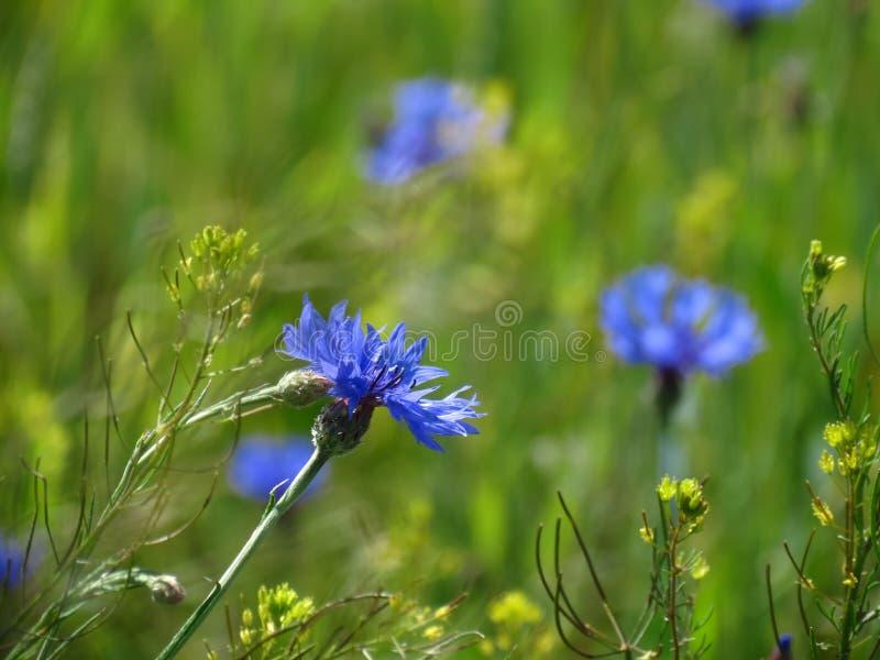 Weidewildflowers stock fotografie