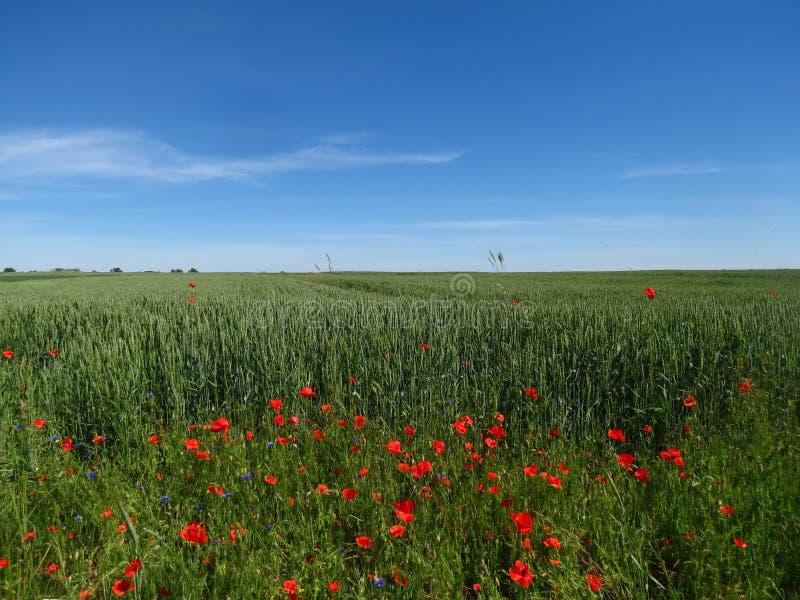 Weidewildflowers royalty-vrije stock afbeelding