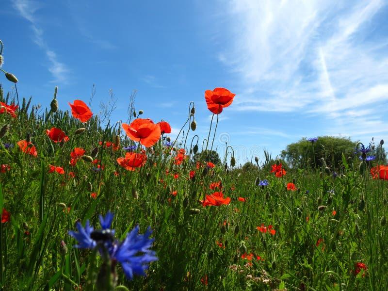 Weidewildflowers royalty-vrije stock fotografie