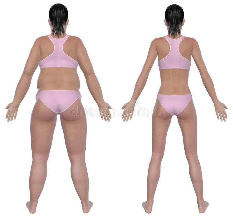 Weight Loss Before And After Rear View stock illustration