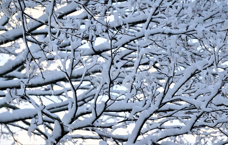 Weighted boughs turn down from latest nor easter snowfall. Spring of 2018 has seen multiple nor easter snow storms in the north eastern united states. Heavy, wet royalty free stock photo